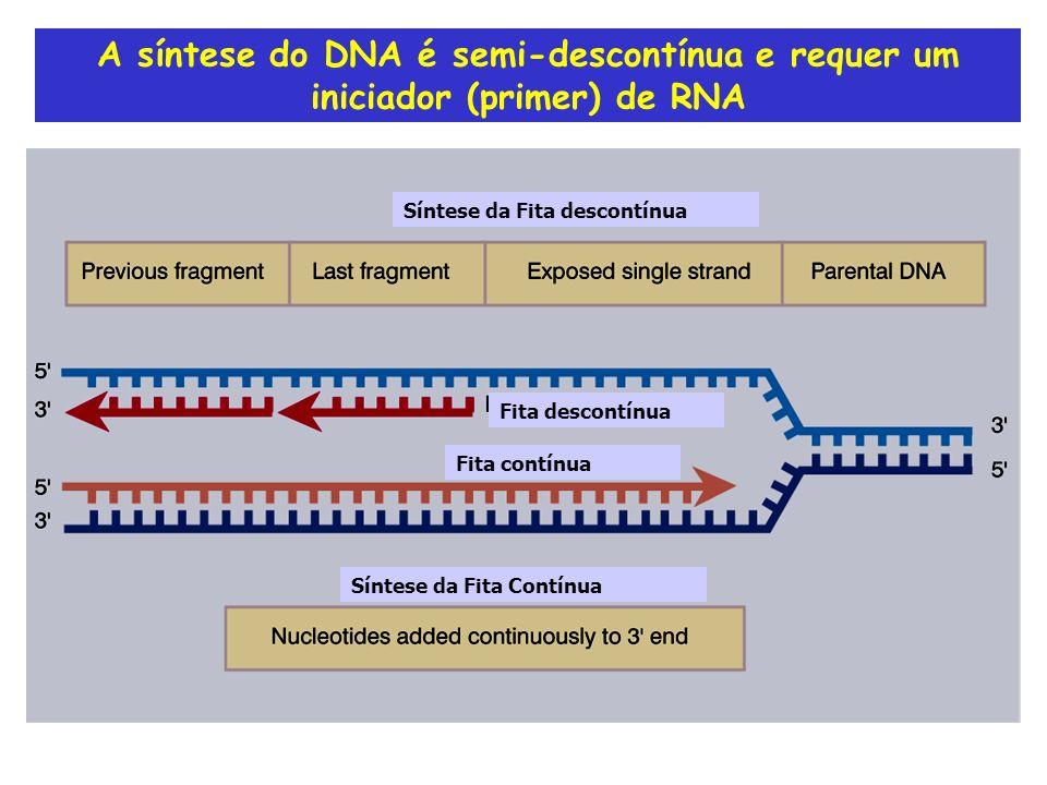 A síntese do DNA é semi-descontínua e requer um iniciador (primer) de RNA Fita contínua Fita descontínua Síntese da Fita descontínua Síntese da Fita C