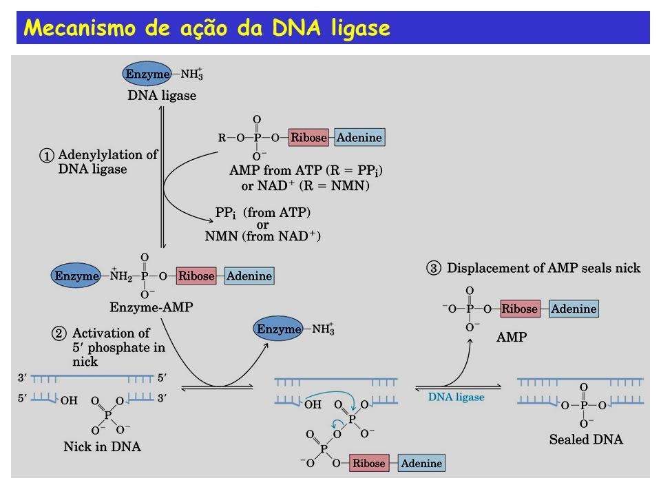 Mecanismo de ação da DNA ligase