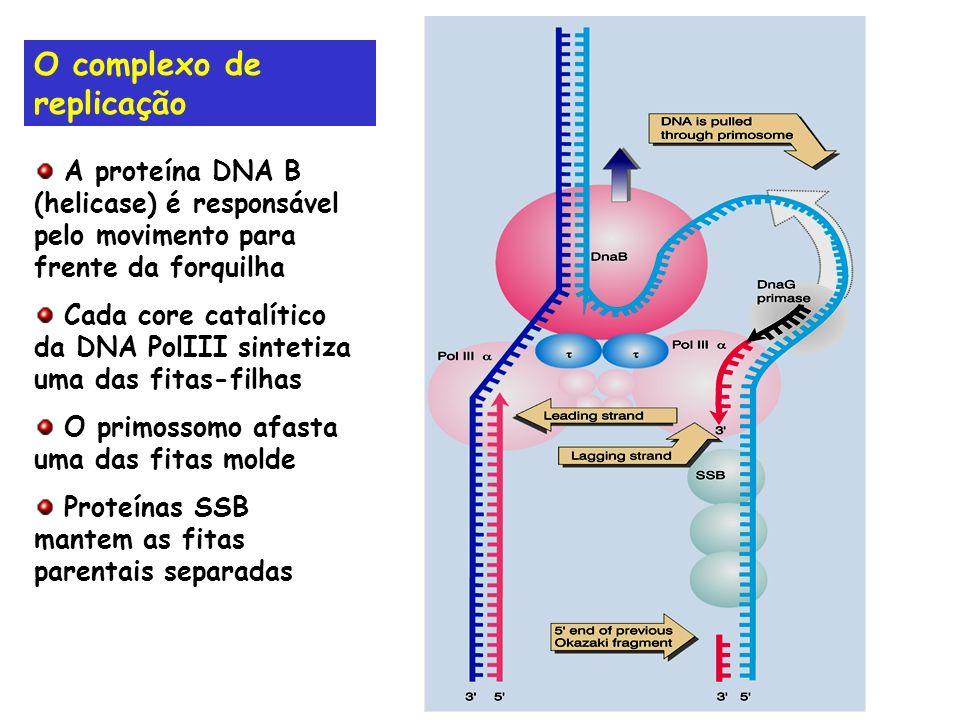 O complexo de replicação A proteína DNA B (helicase) é responsável pelo movimento para frente da forquilha Cada core catalítico da DNA PolIII sintetiz