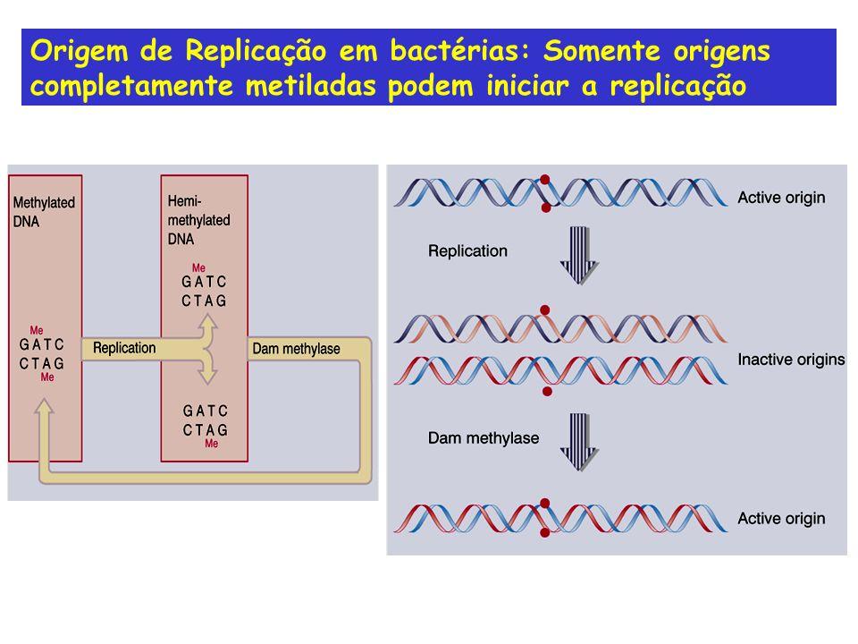 Origem de Replicação em bactérias: Somente origens completamente metiladas podem iniciar a replicação