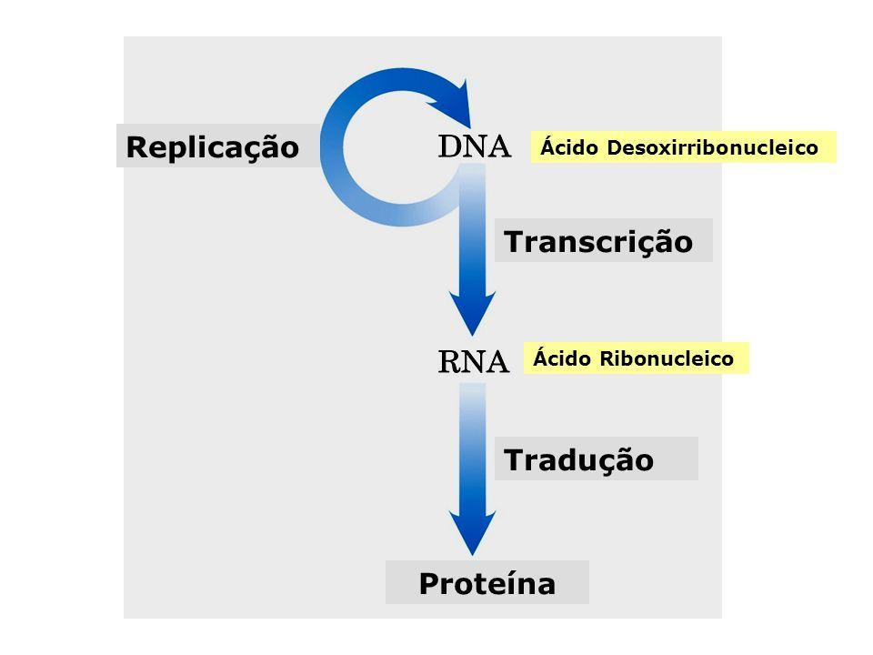 Características das diferentes formas de hélice dupla de DNA