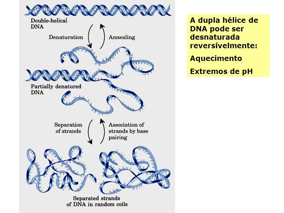 A dupla hélice de DNA pode ser desnaturada reversívelmente: Aquecimento Extremos de pH