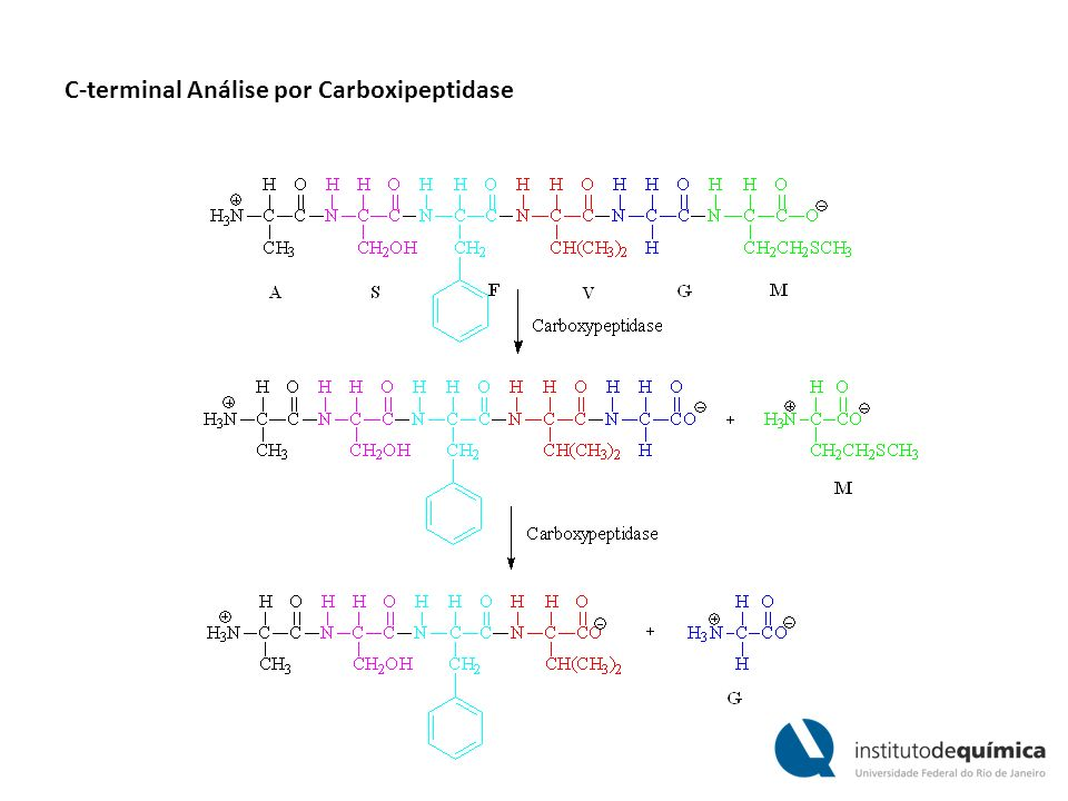 C-terminal Análise por Carboxipeptidase
