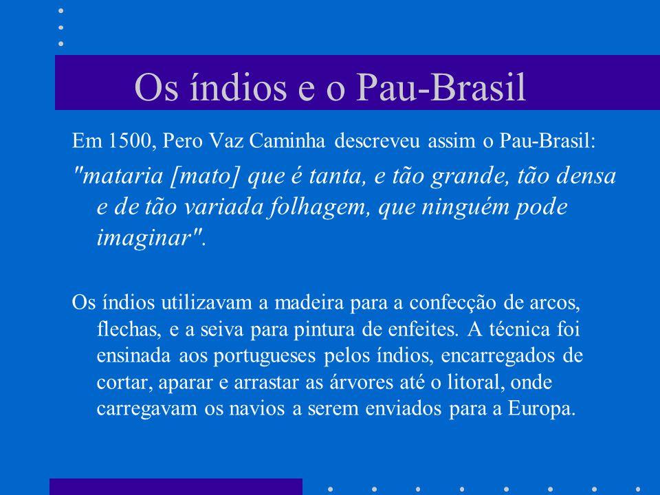 Os índios e o Pau-Brasil Em 1500, Pero Vaz Caminha descreveu assim o Pau-Brasil: