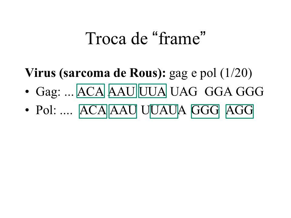 Troca de frame Virus (sarcoma de Rous): gag e pol (1/20) Gag:... ACA AAU UUA UAG GGA GGG Pol:.... ACA AAU UUAUA GGG AGG