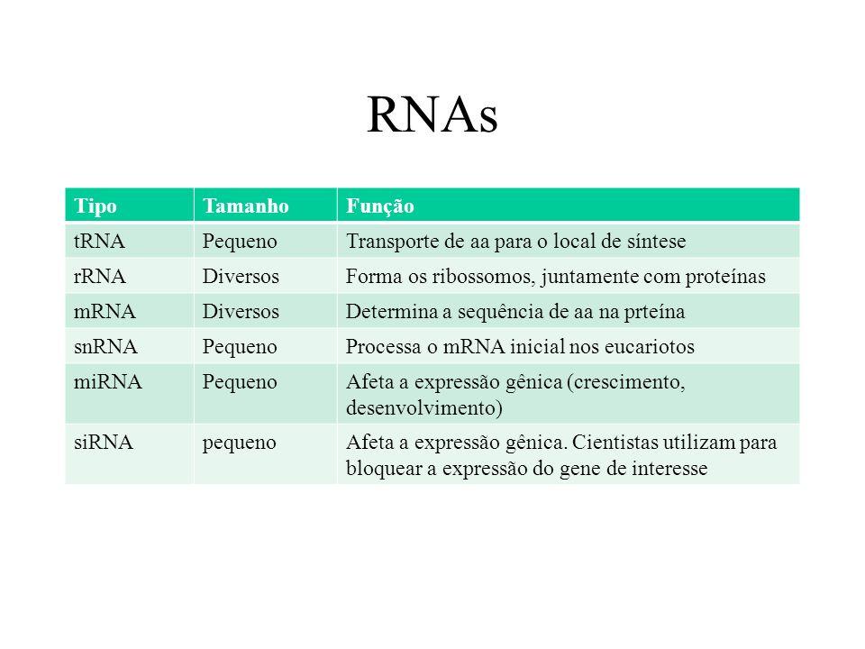 RNAs TipoTamanhoFunção tRNAPequenoTransporte de aa para o local de síntese rRNADiversosForma os ribossomos, juntamente com proteínas mRNADiversosDeter