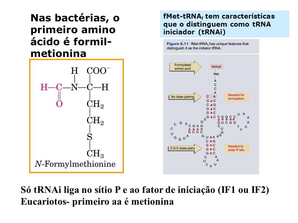 fMet-tRNA f tem características que o distinguem como tRNA iniciador (tRNAi) Nas bactérias, o primeiro amino ácido é formil- metionina Só tRNAi liga n