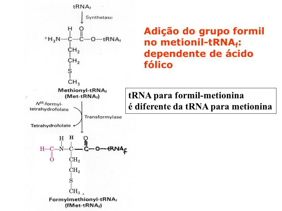 Adição do grupo formil no metionil-tRNA f : dependente de ácido fólico H tRNA para formil-metionina é diferente da tRNA para metionina