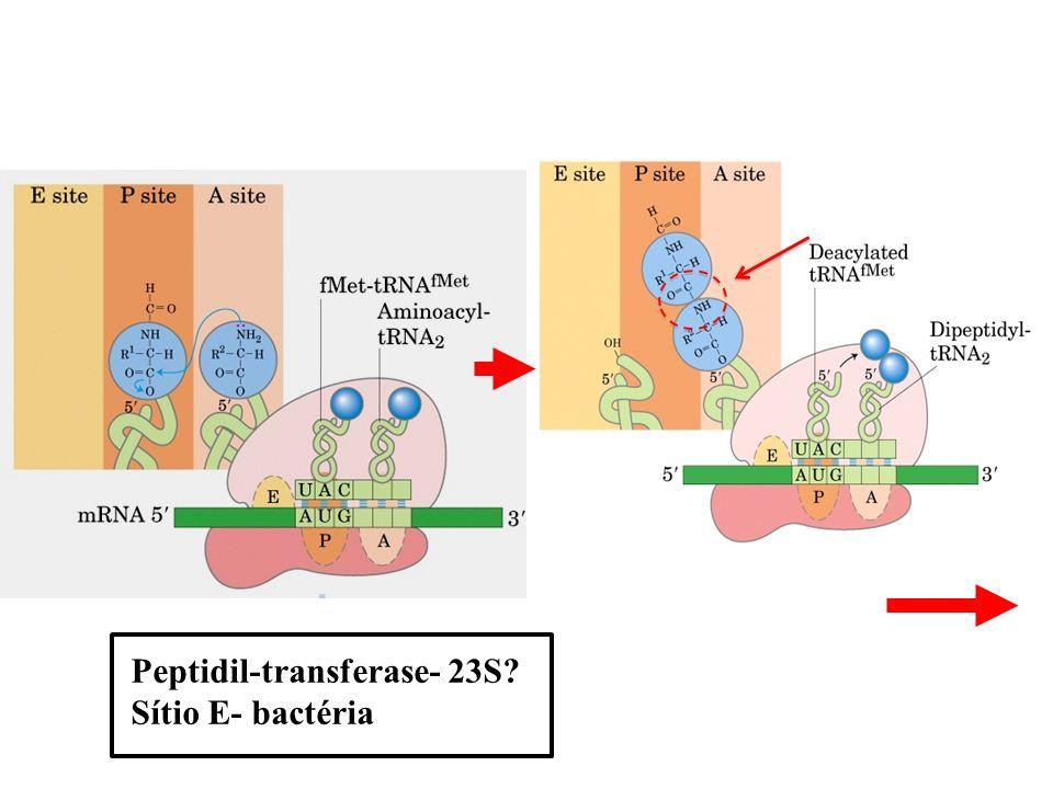 Peptidil-transferase- 23S? Sítio E- bactéria