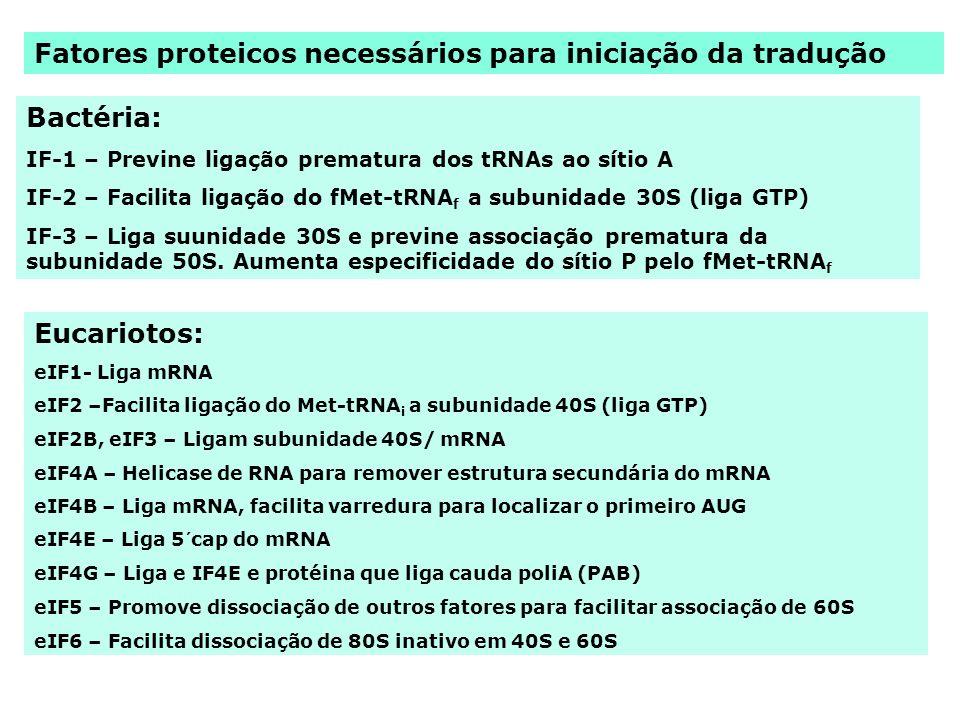 Fatores proteicos necessários para iniciação da tradução Bactéria: IF-1 – Previne ligação prematura dos tRNAs ao sítio A IF-2 – Facilita ligação do fM