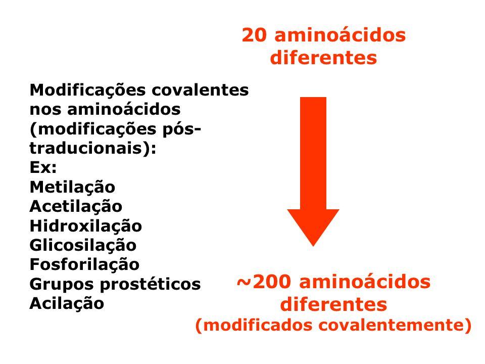 ~200 aminoácidos diferentes (modificados covalentemente) 20 aminoácidos diferentes Modificações covalentes nos aminoácidos (modificações pós- traducio