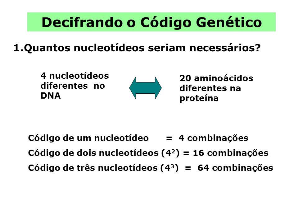 4 nucleotídeos diferentes no DNA Decifrando o Código Genético Código de um nucleotídeo = 4 combinações Código de dois nucleotídeos (4 2 ) = 16 combina