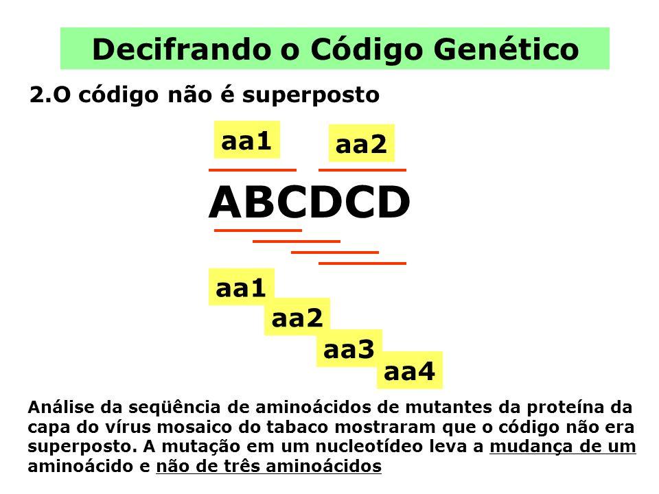 Decifrando o Código Genético 2.O código não é superposto ABCDCD aa1 aa2 aa1 aa2 aa3 aa4 Análise da seqüência de aminoácidos de mutantes da proteína da