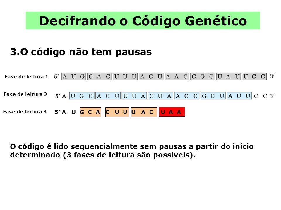 Decifrando o Código Genético 3.O código não tem pausas O código é lido sequencialmente sem pausas a partir do início determinado (3 fases de leitura s