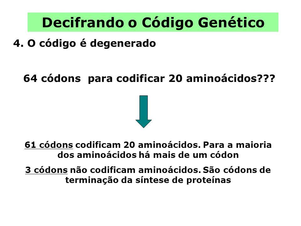 Decifrando o Código Genético 4. O código é degenerado 61 códons codificam 20 aminoácidos. Para a maioria dos aminoácidos há mais de um códon 3 códons