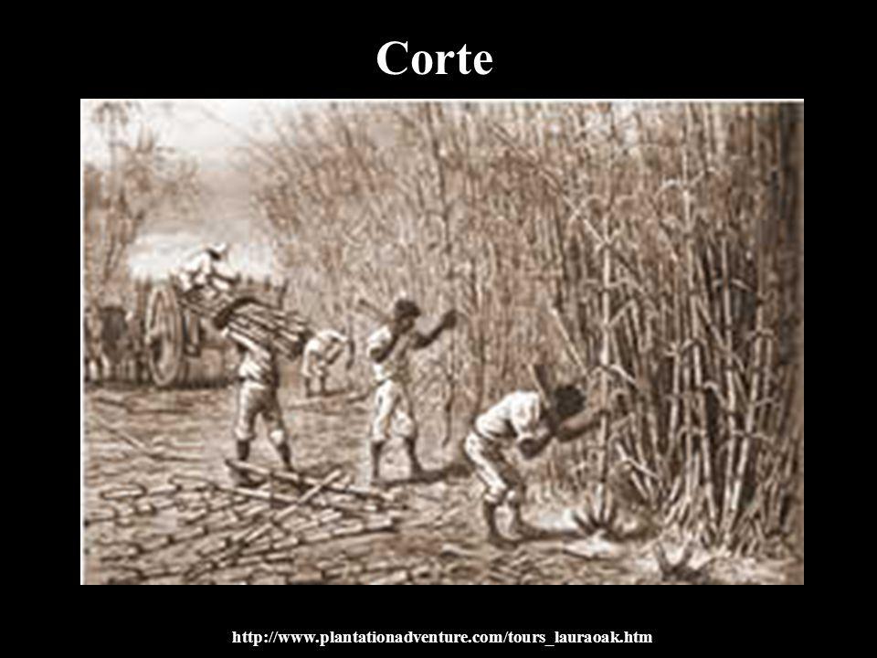 Corte http://www.plantationadventure.com/tours_lauraoak.htm