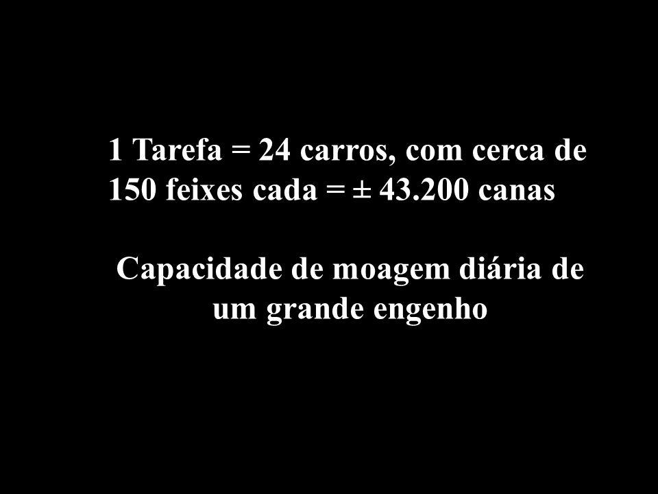 1 Tarefa = 24 carros, com cerca de 150 feixes cada = ± 43.200 canas Capacidade de moagem diária de um grande engenho