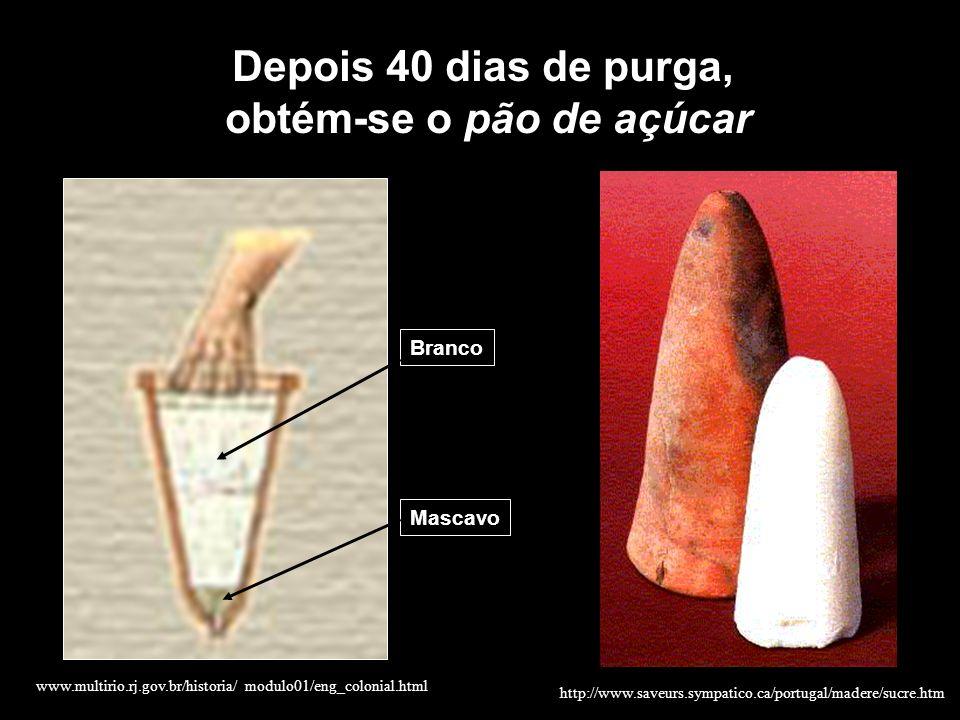 Mascavo Branco Depois 40 dias de purga, obtém-se o pão de açúcar www.multirio.rj.gov.br/historia/ modulo01/eng_colonial.html http://www.saveurs.sympat