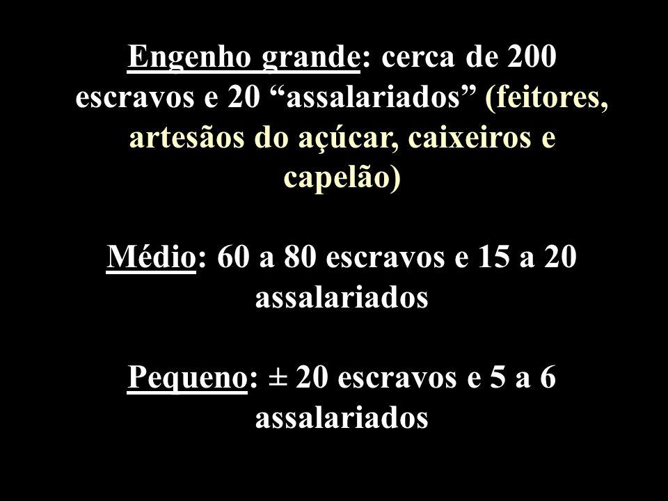 Engenho grande: cerca de 200 escravos e 20 assalariados (feitores, artesãos do açúcar, caixeiros e capelão) Médio: 60 a 80 escravos e 15 a 20 assalari