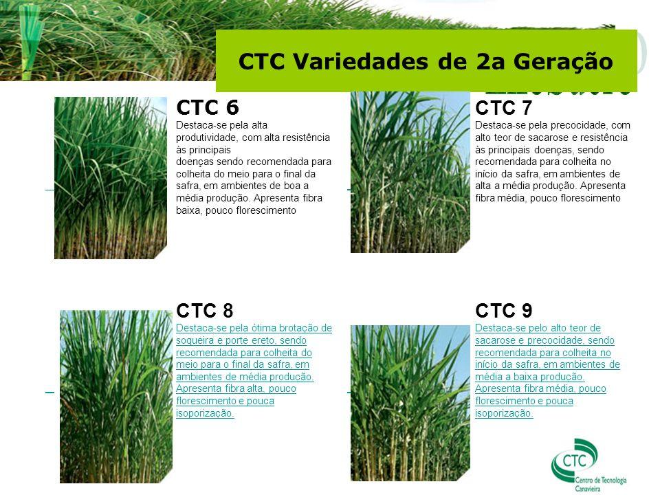 CTC 6 Destaca-se pela alta produtividade, com alta resistência às principais doenças sendo recomendada para colheita do meio para o final da safra, em ambientes de boa a média produção.