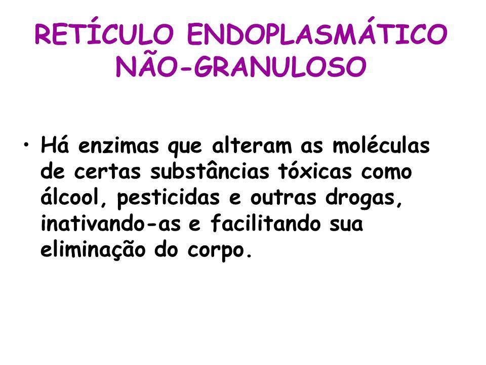 RETÍCULO ENDOPLASMÁTICO NÃO-GRANULOSO Há enzimas que alteram as moléculas de certas substâncias tóxicas como álcool, pesticidas e outras drogas, inati