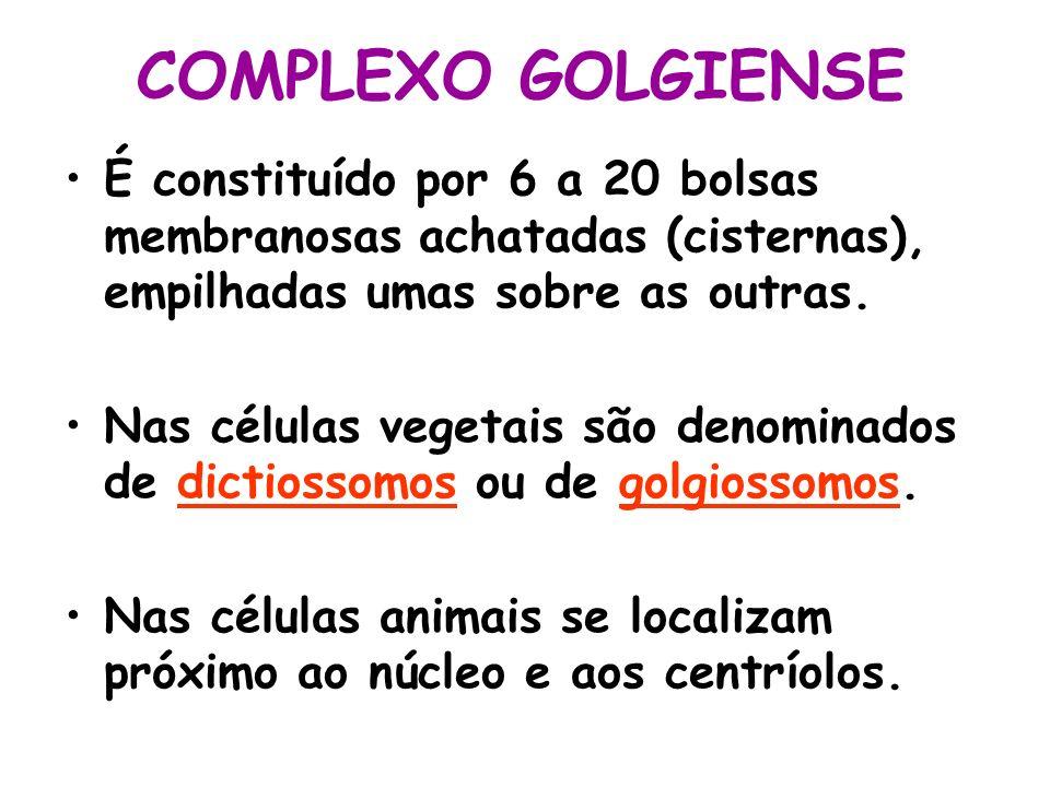 COMPLEXO GOLGIENSE É constituído por 6 a 20 bolsas membranosas achatadas (cisternas), empilhadas umas sobre as outras. Nas células vegetais são denomi
