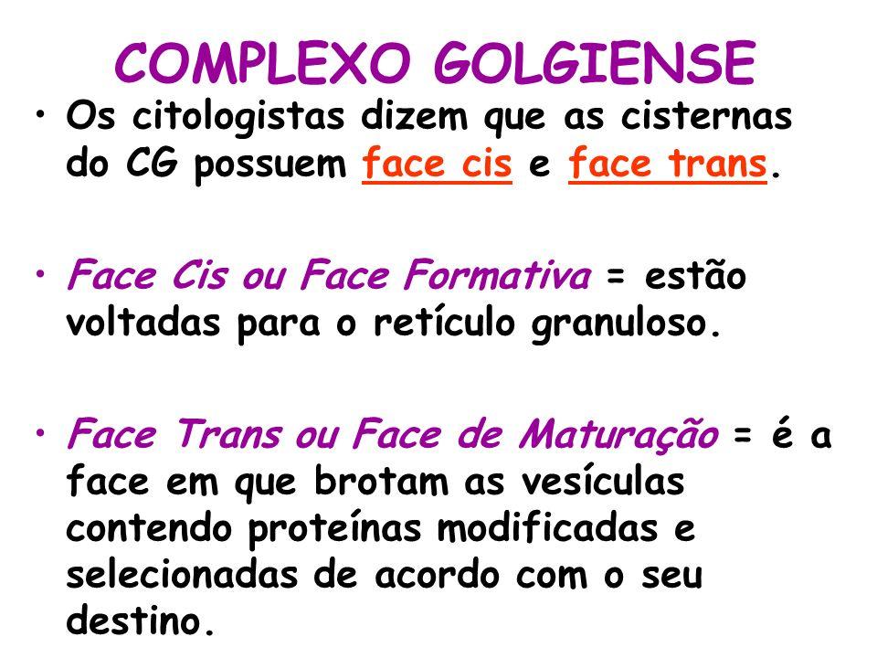 COMPLEXO GOLGIENSE Os citologistas dizem que as cisternas do CG possuem face cis e face trans. Face Cis ou Face Formativa = estão voltadas para o retí