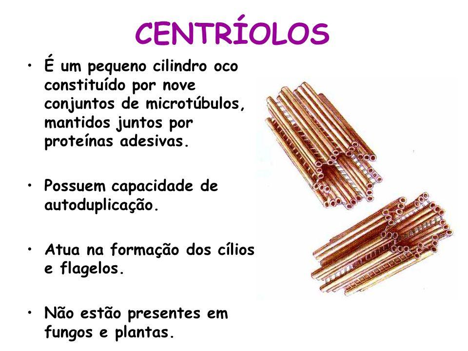 CENTRÍOLOS É um pequeno cilindro oco constituído por nove conjuntos de microtúbulos, mantidos juntos por proteínas adesivas. Possuem capacidade de aut