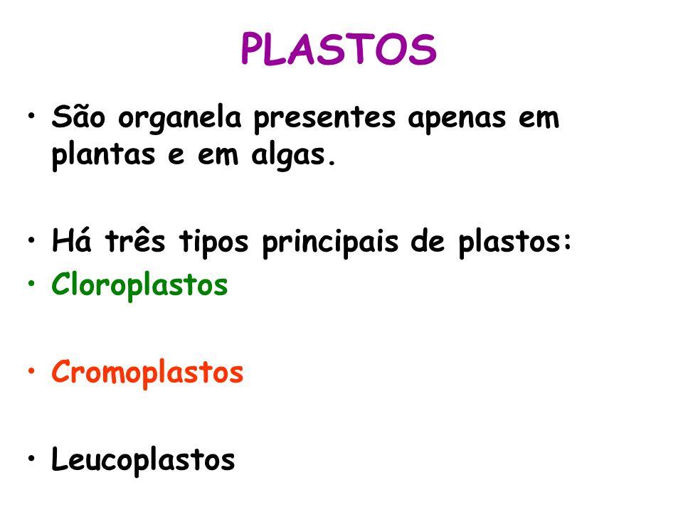 PLASTOS São organela presentes apenas em plantas e em algas. Há três tipos principais de plastos: Cloroplastos Cromoplastos Leucoplastos