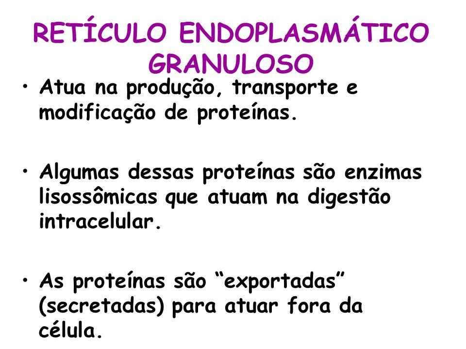 BIBLIOGRAFIA MARTHO, Gilberto Rodrigues.AMABIS, José Mariano.