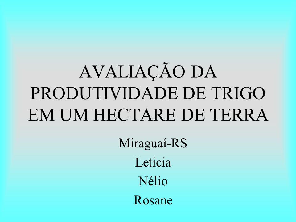 AVALIAÇÃO DA PRODUTIVIDADE DE TRIGO EM UM HECTARE DE TERRA Miraguaí-RS Leticia Nélio Rosane