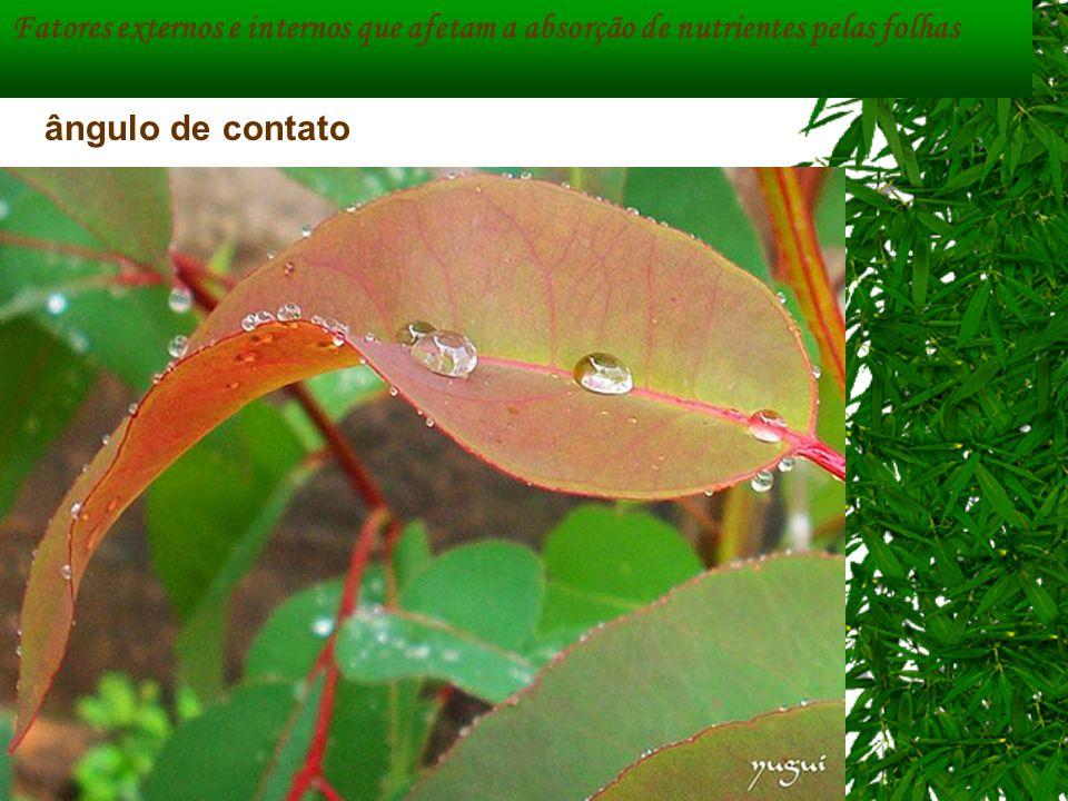ângulo de contato Fatores externos e internos que afetam a absorção de nutrientes pelas folhas