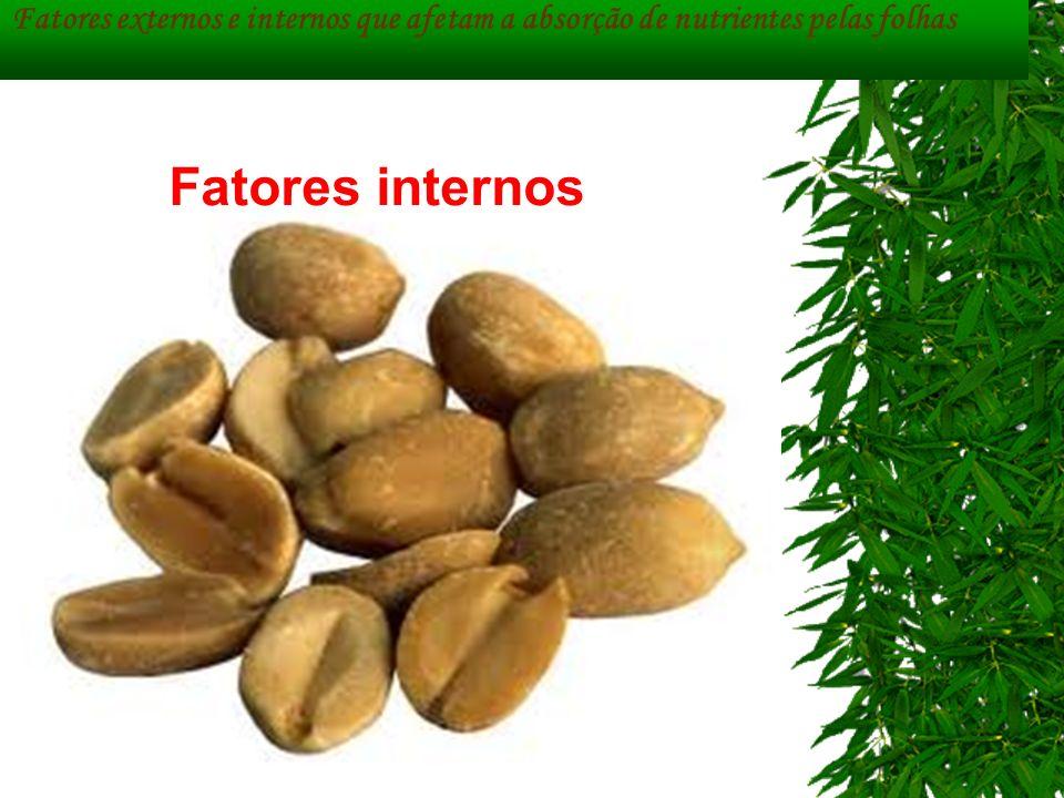 Fatores externos e internos que afetam a absorção de nutrientes pelas folhas Fatores internos