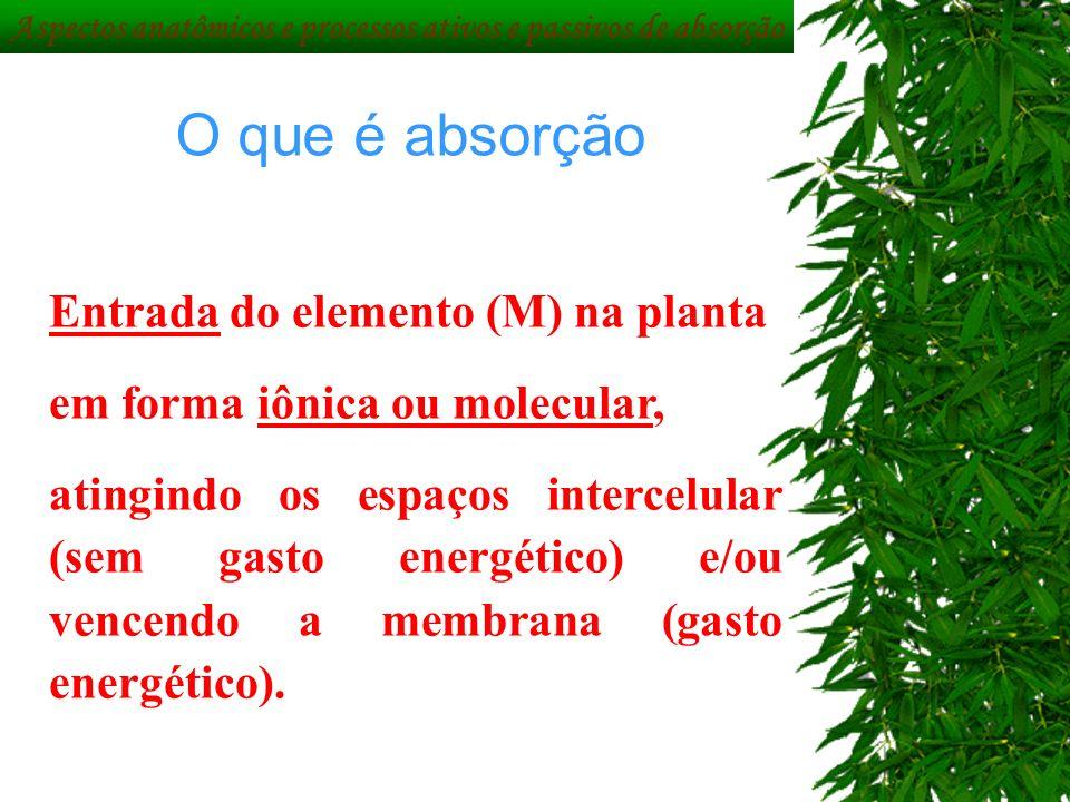 Aspectos anatômicos e processos ativos e passivos de absorção O que é absorção Entrada do elemento (M) na planta em forma iônica ou molecular, atingin