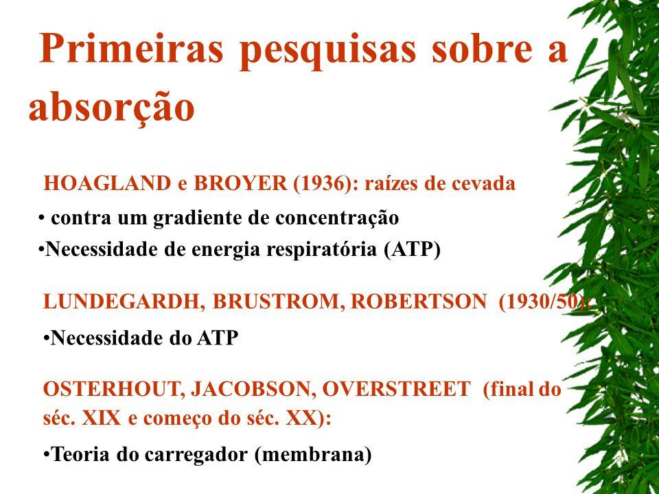 HOAGLAND e BROYER (1936): raízes de cevada contra um gradiente de concentração Necessidade de energia respiratória (ATP) Primeiras pesquisas sobre a a
