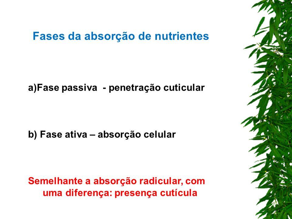Fases da absorção de nutrientes a)Fase passiva - penetração cuticular b) Fase ativa – absorção celular Semelhante a absorção radicular, com uma difere
