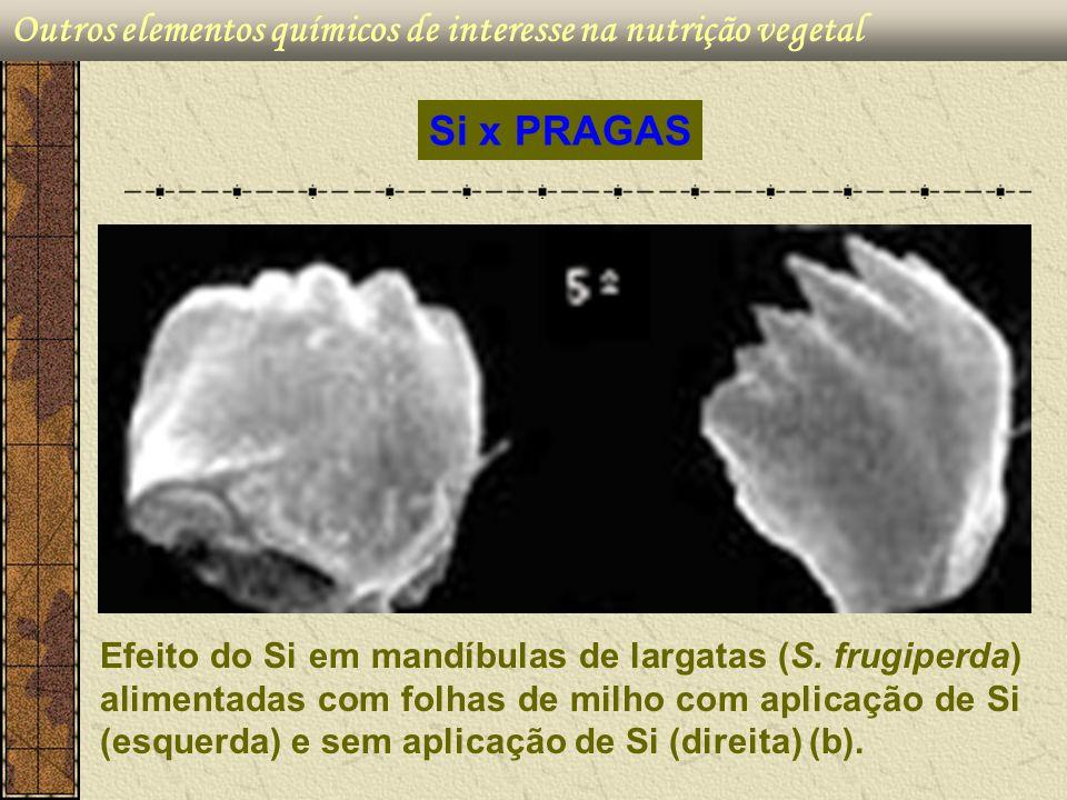 Outros elementos químicos de interesse na nutrição vegetal Efeito do Si em mandíbulas de largatas (S. frugiperda) alimentadas com folhas de milho com