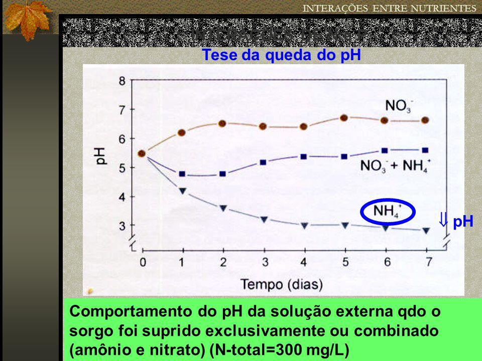 INTERAÇÕES ENTRE NUTRIENTES INTERAÇÕES DE N e P: Tese da queda do pH Comportamento do pH da solução externa qdo o sorgo foi suprido exclusivamente ou
