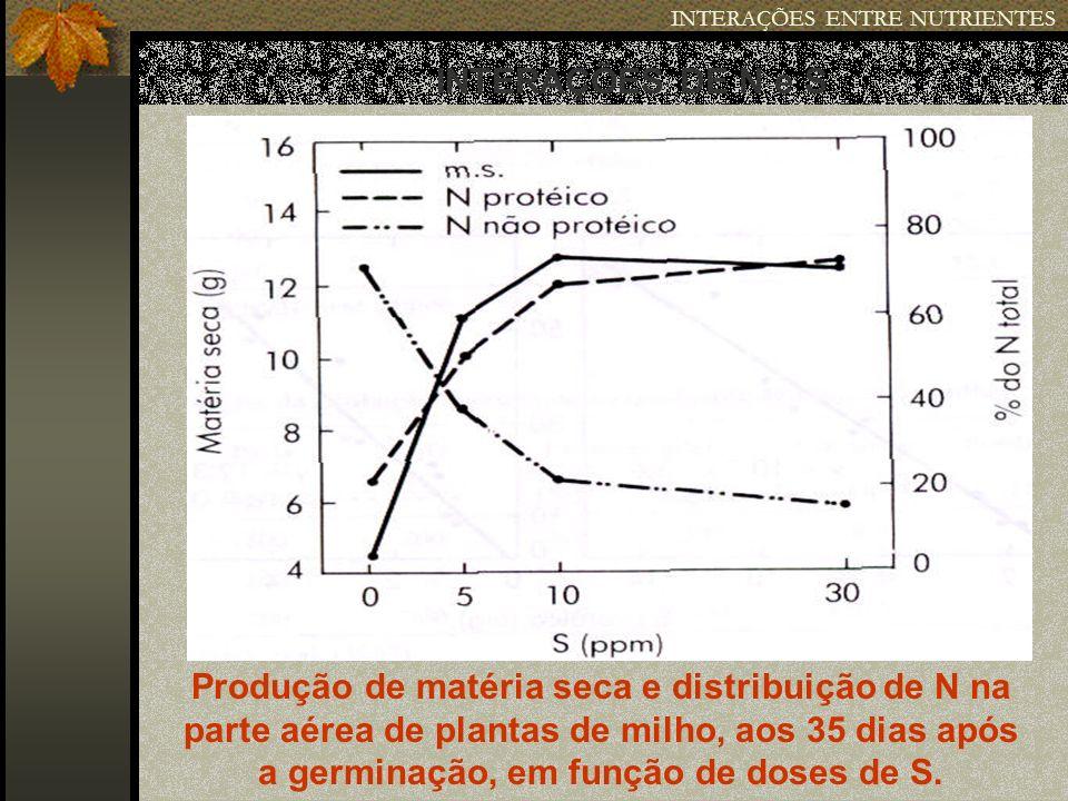 INTERAÇÕES ENTRE NUTRIENTES INTERAÇÕES DE N e S Produção de matéria seca e distribuição de N na parte aérea de plantas de milho, aos 35 dias após a ge