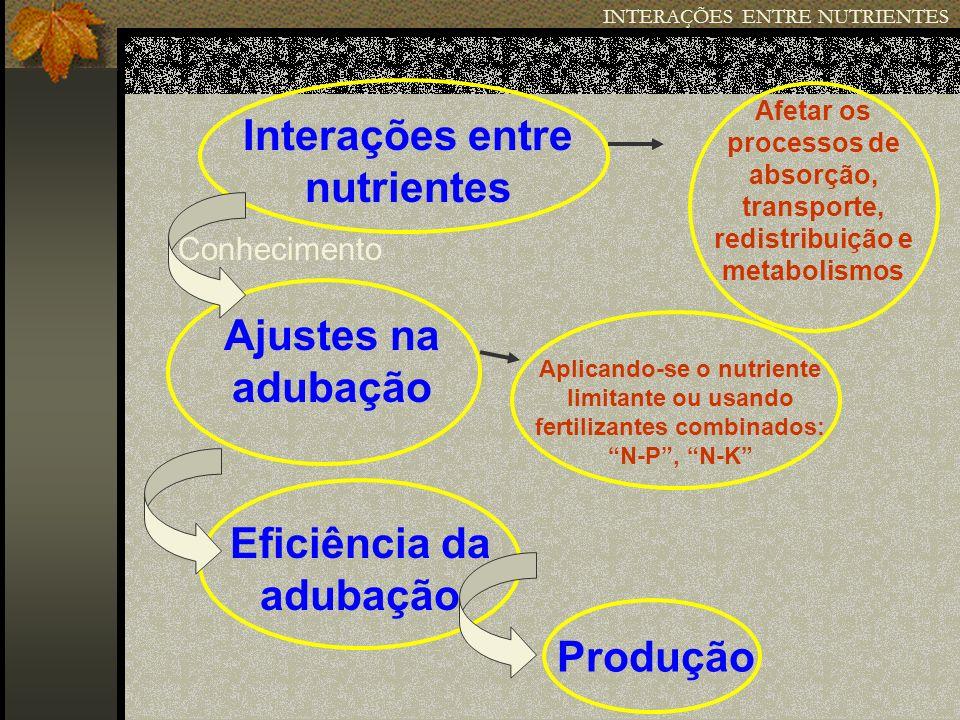 INTERAÇÕES ENTRE NUTRIENTES Produção de milho em função das relações P/Zn no tecido foliar.