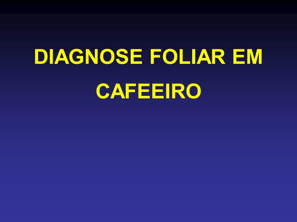 DIAGNOSE FOLIAR EM CAFEEIRO