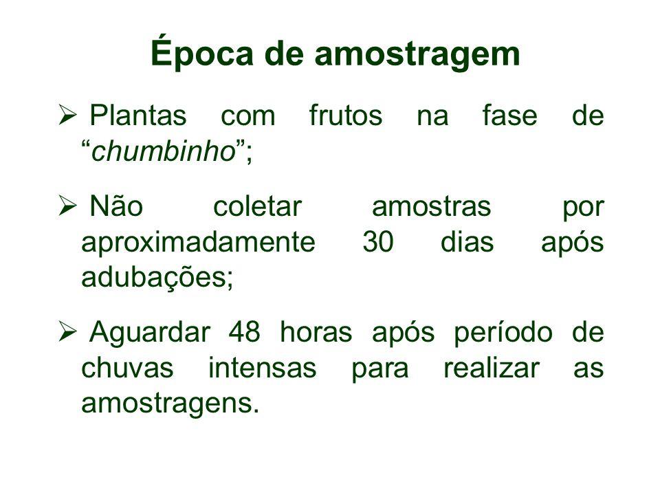 Época de amostragem Plantas com frutos na fase dechumbinho; Não coletar amostras por aproximadamente 30 dias após adubações; Aguardar 48 horas após pe