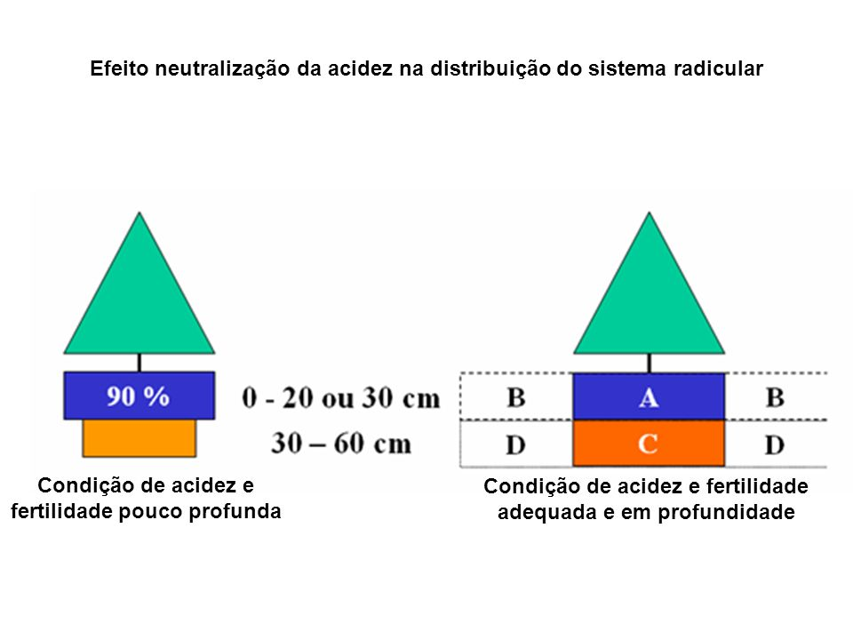 Condição de acidez e fertilidade pouco profunda Condição de acidez e fertilidade adequada e em profundidade Efeito neutralização da acidez na distribu