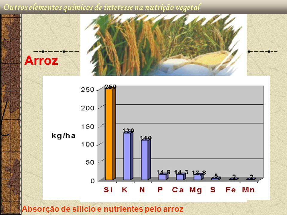Absorção de silício e nutrientes pelo arroz Arroz Outros elementos químicos de interesse na nutrição vegetal