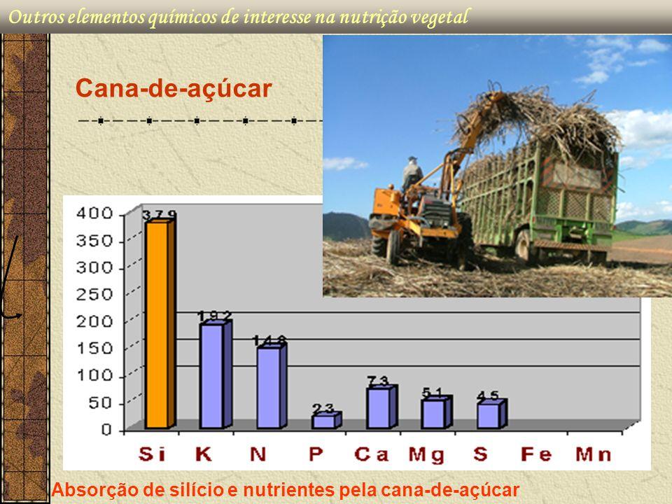 Cana-de-açúcar Outros elementos químicos de interesse na nutrição vegetal Absorção de silício e nutrientes pela cana-de-açúcar