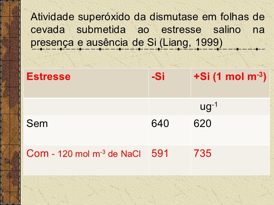 Atividade superóxido da dismutase em folhas de cevada submetida ao estresse salino na presença e ausência de Si (Liang, 1999) Estresse-Si+Si (1 mol m