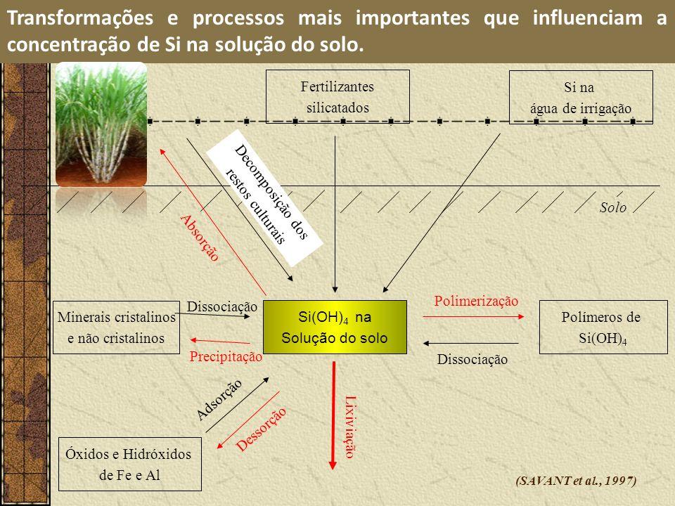 Solo Transformações e processos mais importantes que influenciam a concentração de Si na solução do solo. Polimerização Polímeros de Si(OH) 4 Dissocia
