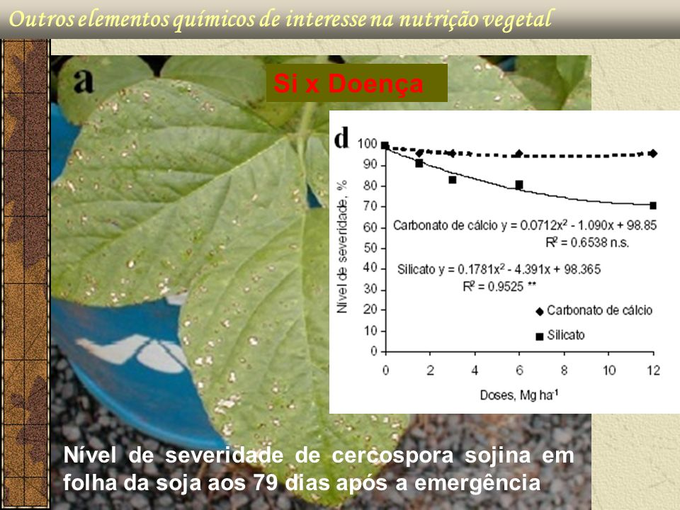 Outros elementos químicos de interesse na nutrição vegetal Nível de severidade de cercospora sojina em folha da soja aos 79 dias após a emergência Si