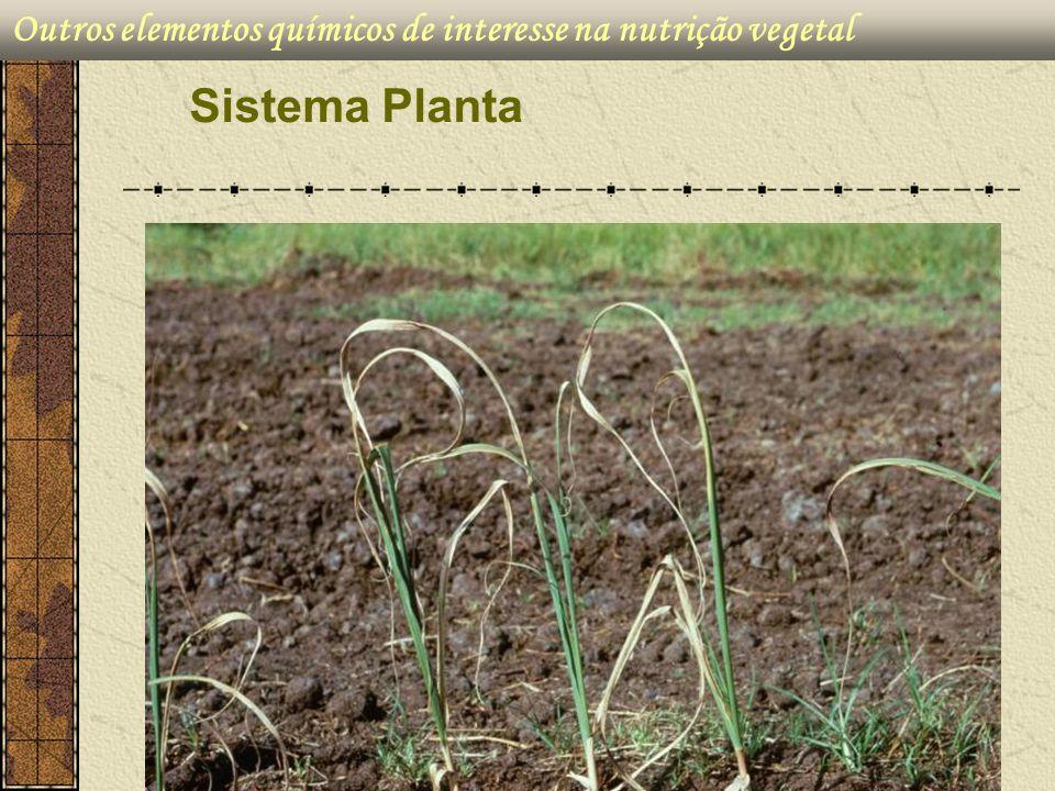 Outros elementos químicos de interesse na nutrição vegetal Sistema Planta