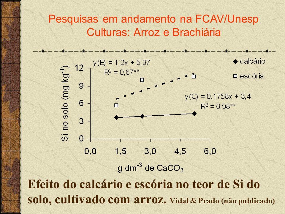 Efeito do calcário e escória no teor de Si do solo, cultivado com arroz. Vidal & Prado (não publicado) Pesquisas em andamento na FCAV/Unesp Culturas: